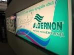 Algernon 29